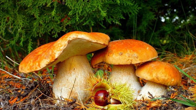 Осенний лес с грибами картинки для детей (18)