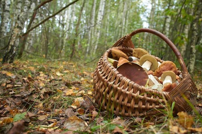 Осенний лес с грибами картинки для детей (3)