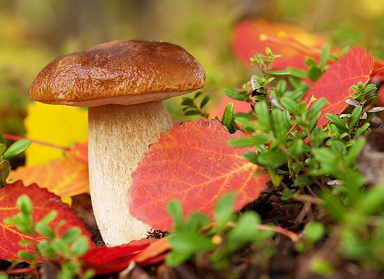 Осенний лес с грибами картинки для детей (4)