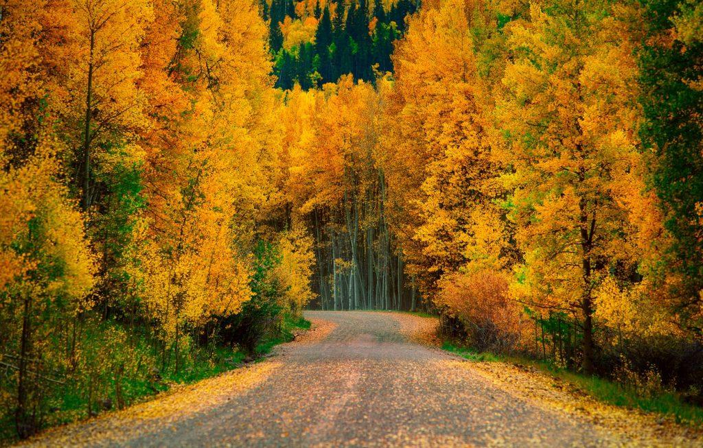 Осень в лесу фото на рабочий стол - самые лучшие (1)