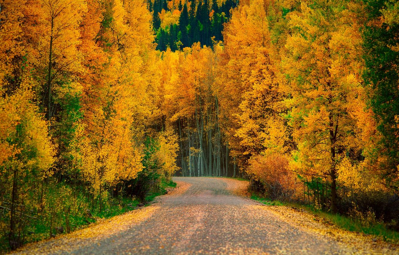Осень в лесу фото на рабочий стол   самые лучшие (1)
