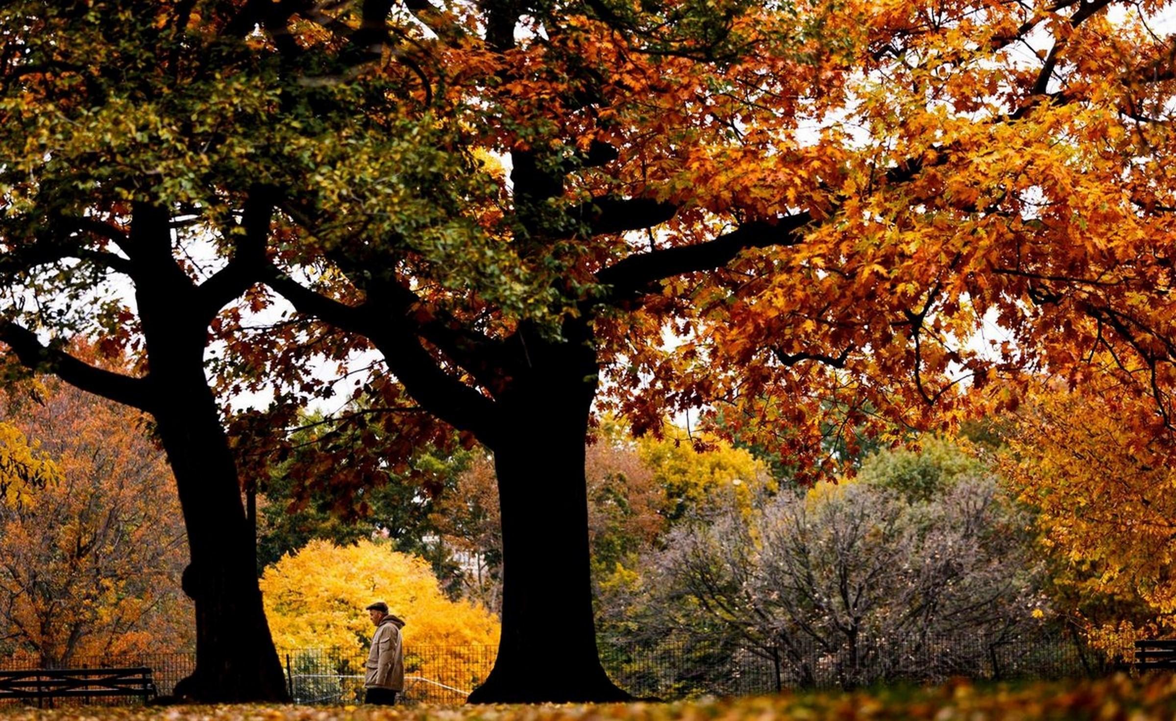 Осень в лесу фото на рабочий стол   самые лучшие (10)
