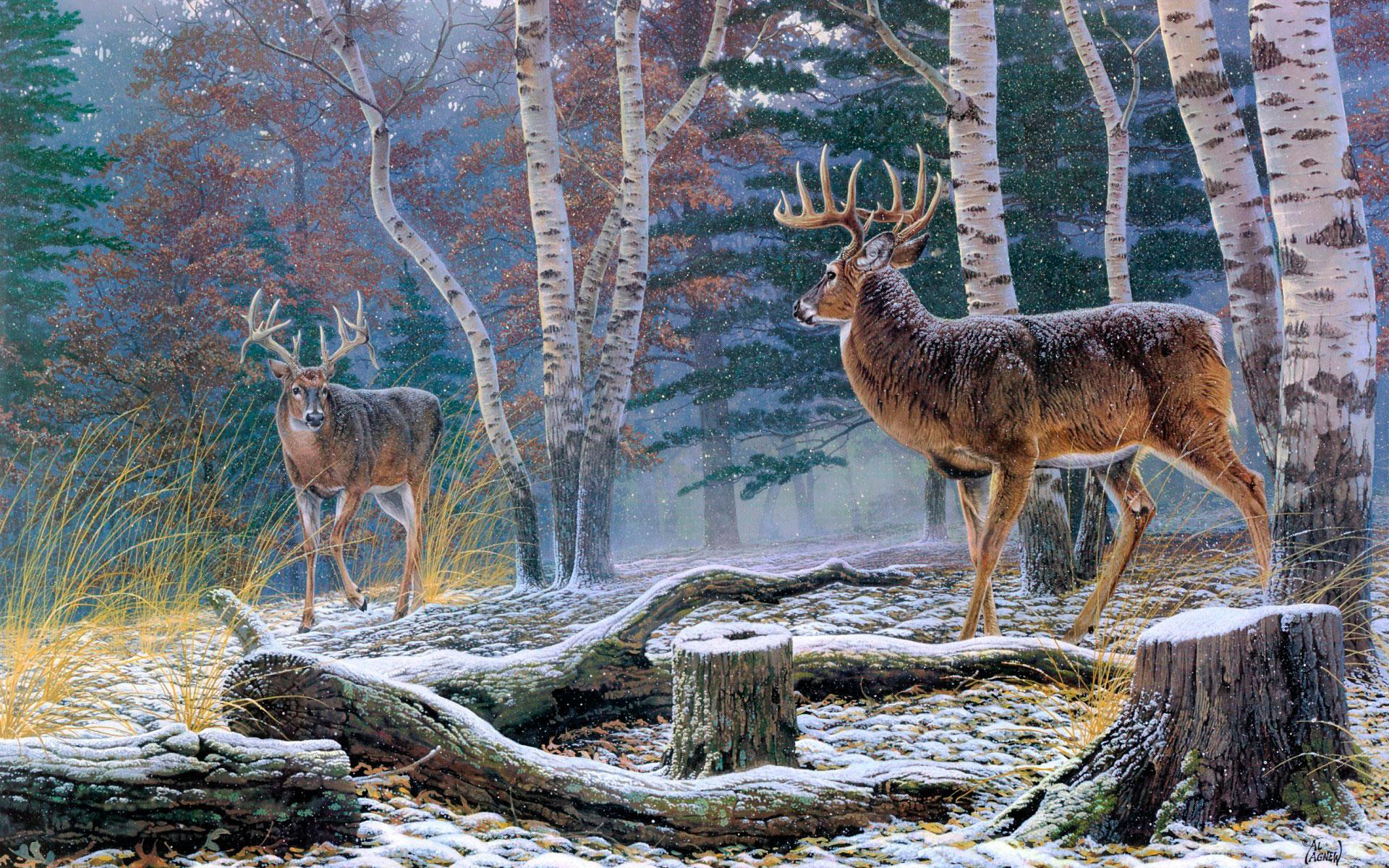 Осень в лесу фото на рабочий стол   самые лучшие (11)