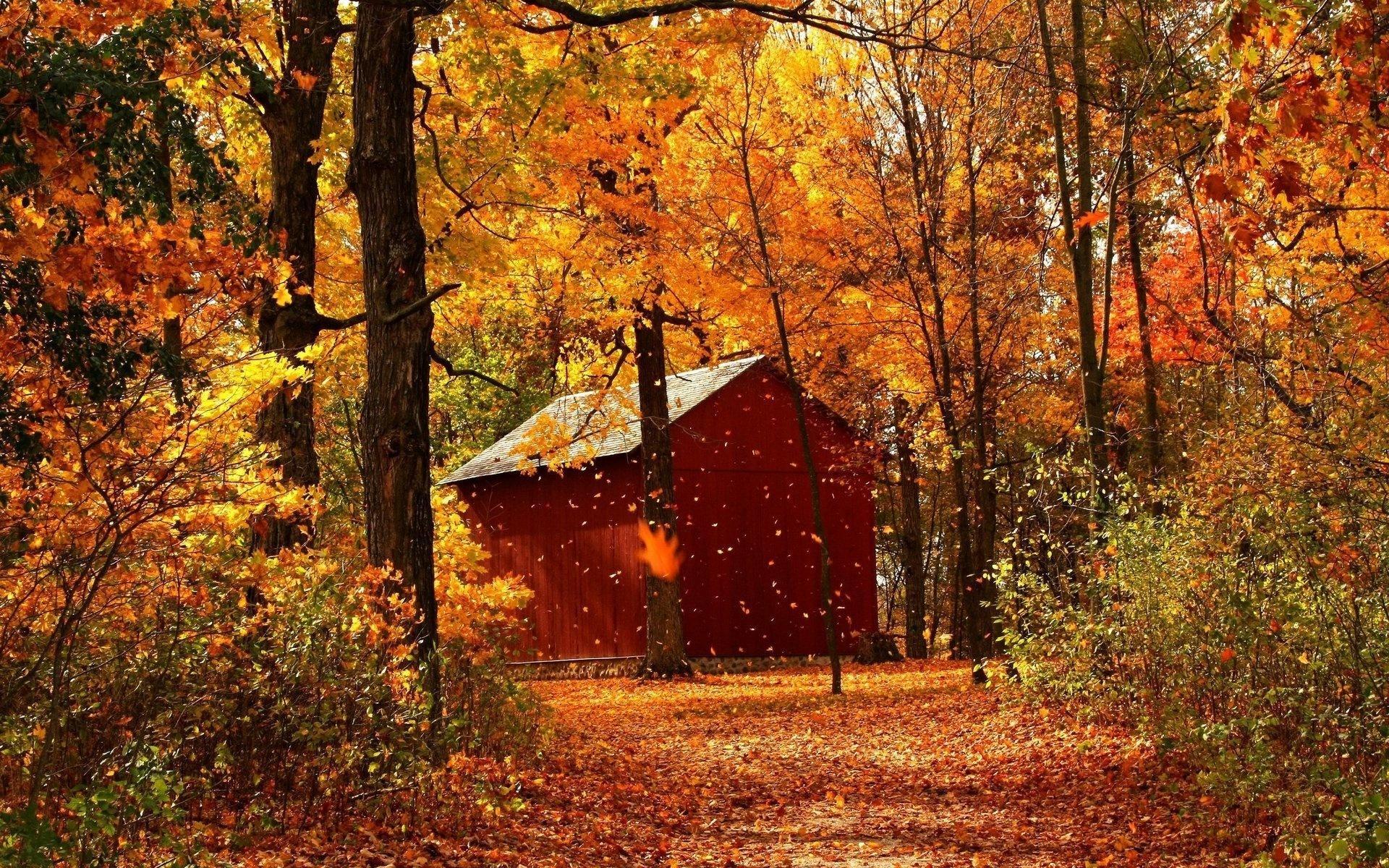 Осень в лесу фото на рабочий стол   самые лучшие (12)