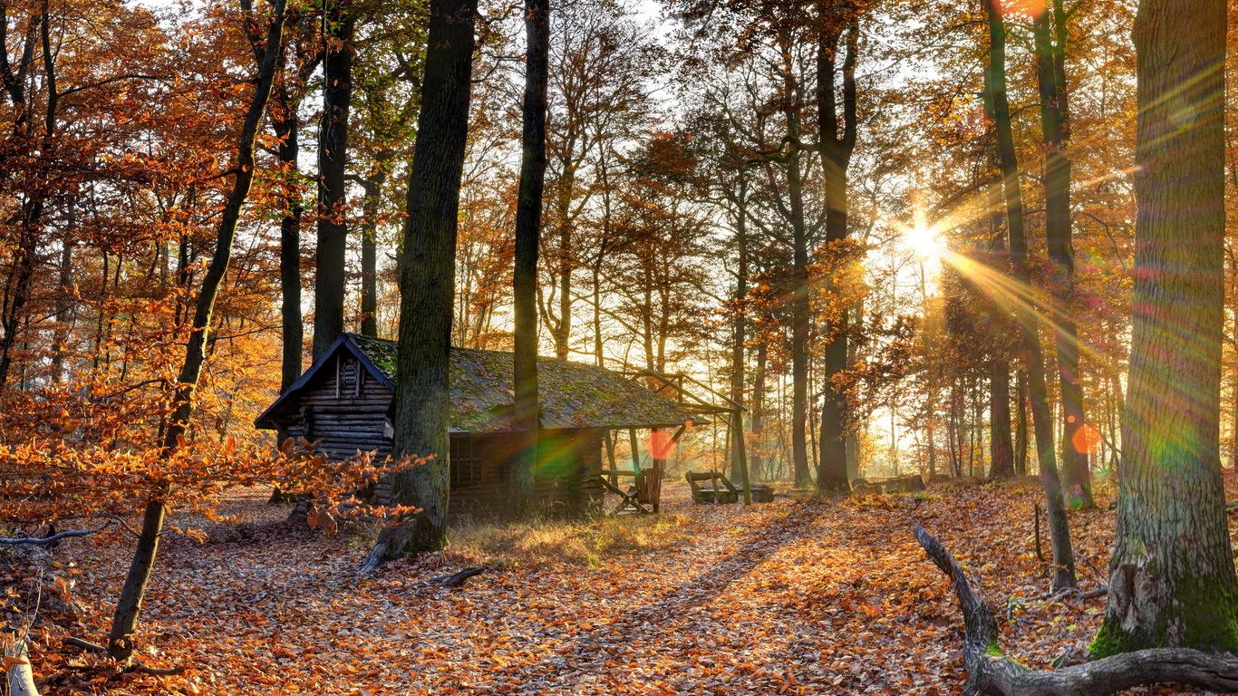 Осень в лесу фото на рабочий стол   самые лучшие (14)
