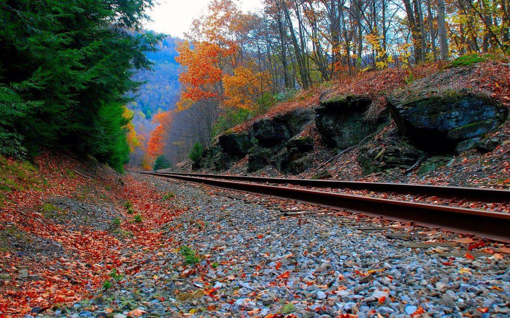 Осень в лесу фото на рабочий стол - самые лучшие (15)