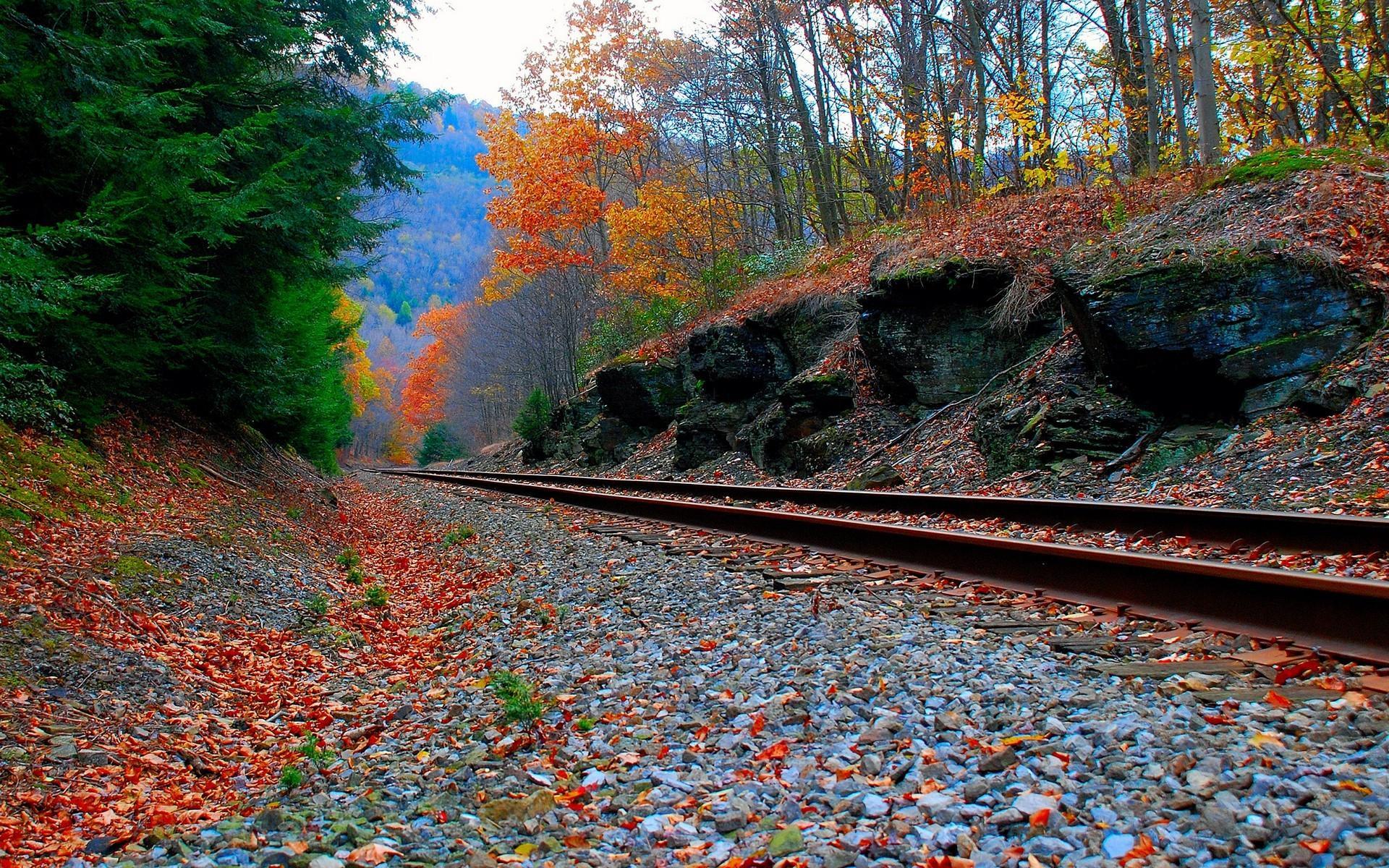 Осень в лесу фото на рабочий стол   самые лучшие (15)