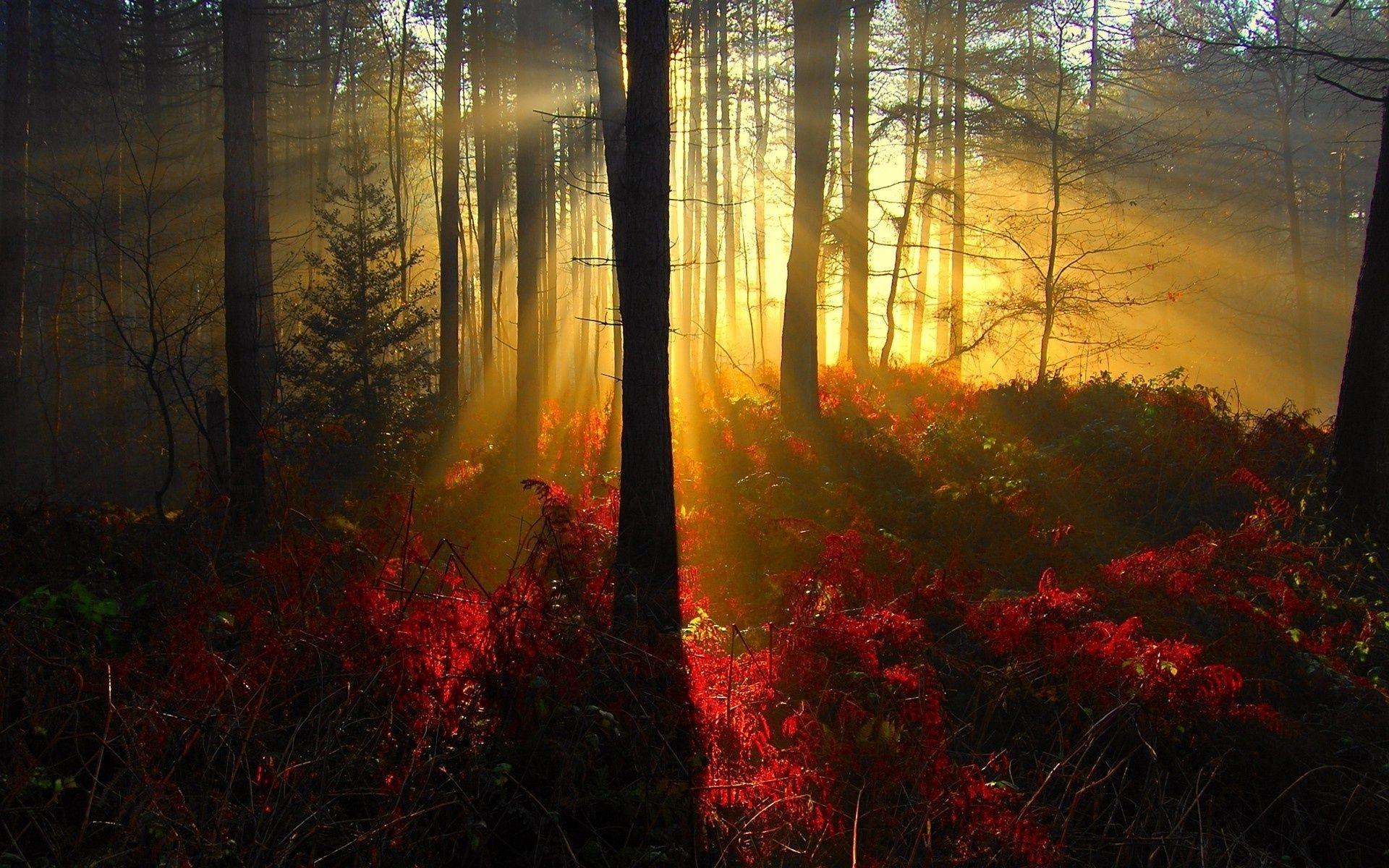 ностра картинка красивого заката в лесу главные