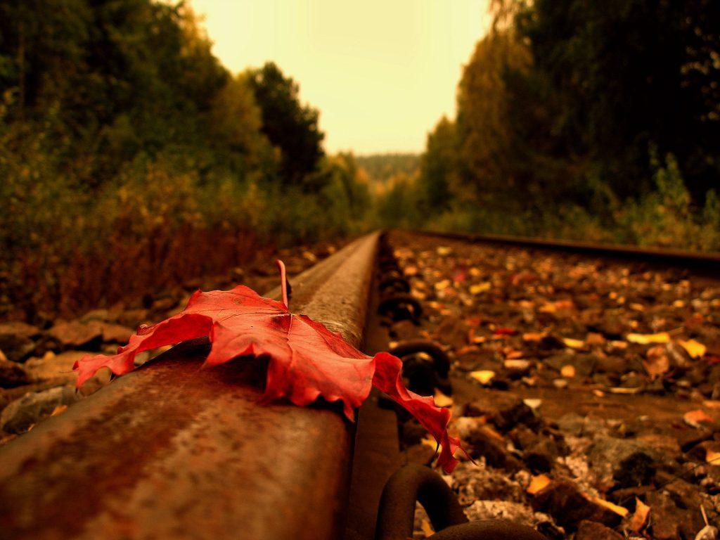 Осень в лесу фото на рабочий стол - самые лучшие (2)