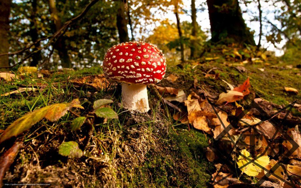 Осень в лесу фото на рабочий стол - самые лучшие (3)