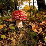 Осень в лесу фото на рабочий стол — самые лучшие