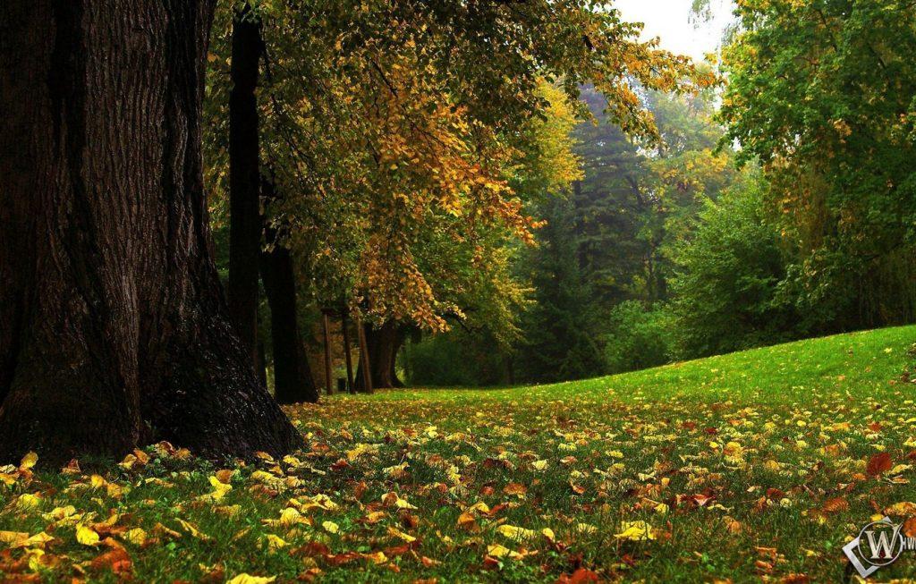 Осень в лесу фото на рабочий стол - самые лучшие (4)