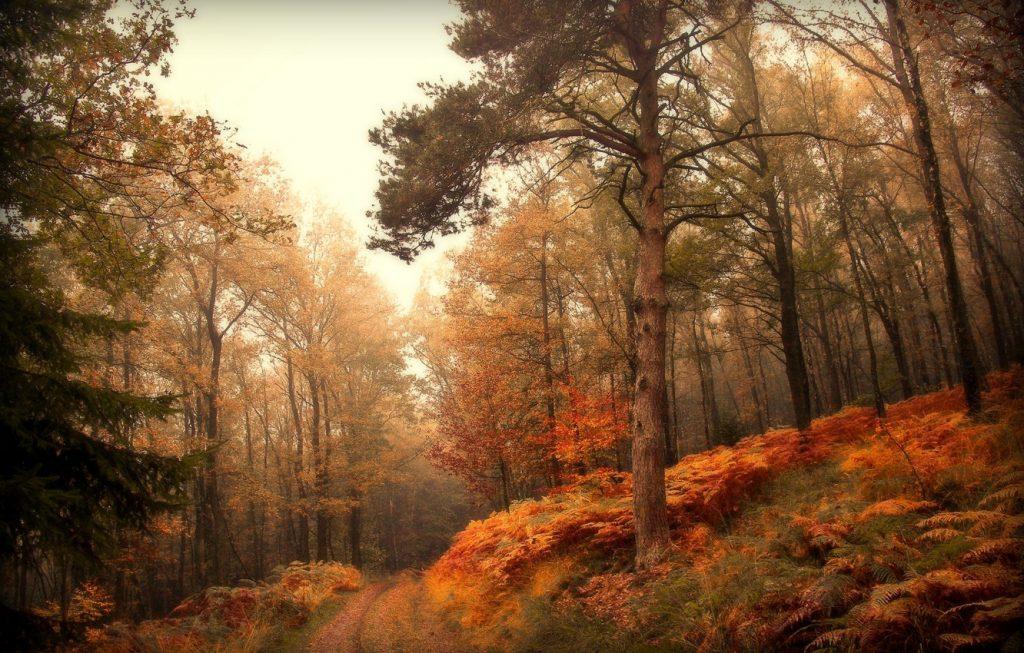 Осень в лесу фото на рабочий стол - самые лучшие (5)
