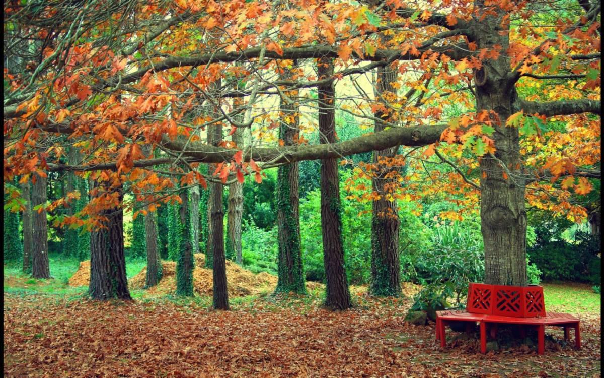Осень в лесу фото на рабочий стол   самые лучшие (6)
