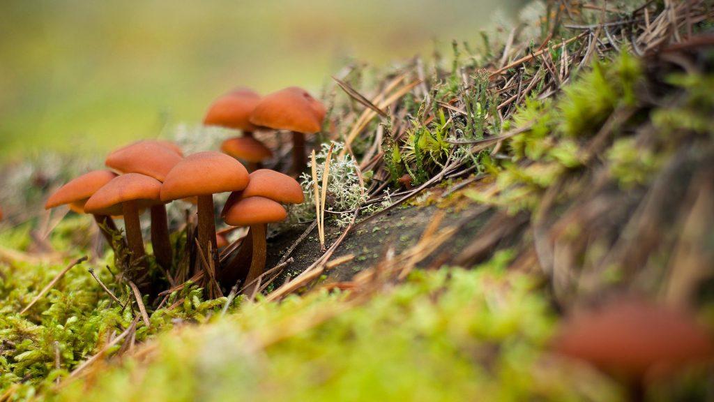 Осень в лесу фото на рабочий стол - самые лучшие (7)