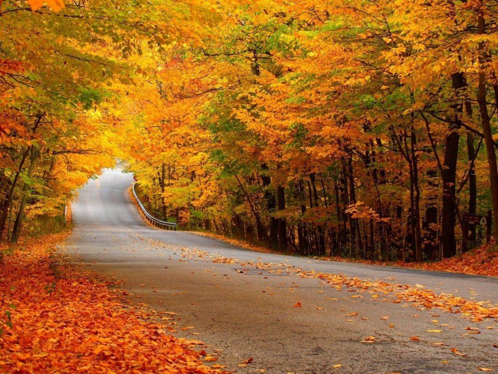 Осень в лесу фото на рабочий стол - самые лучшие (9)