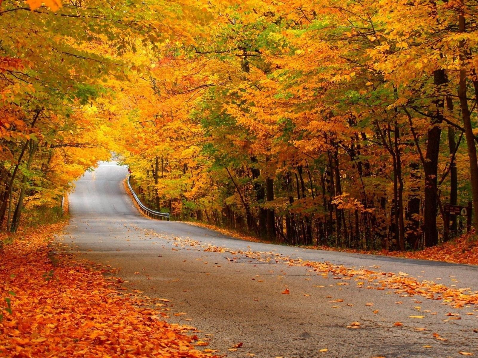Осень в лесу фото на рабочий стол   самые лучшие (9)