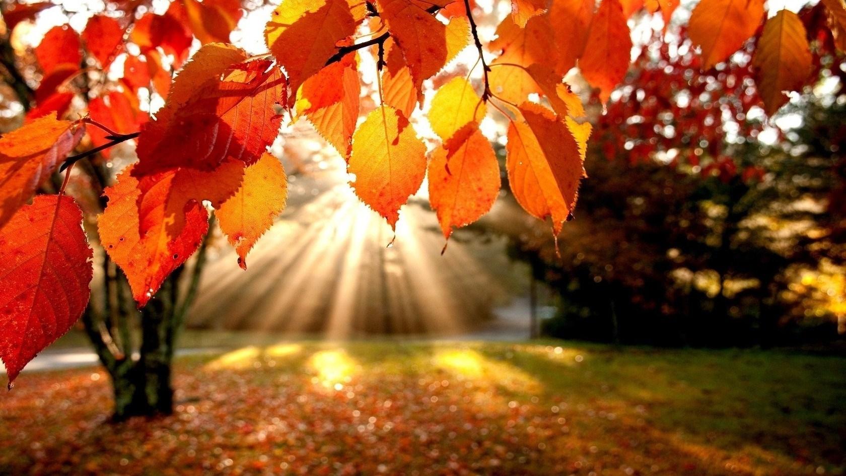 Осень картинки на рабочий стол 3 д010