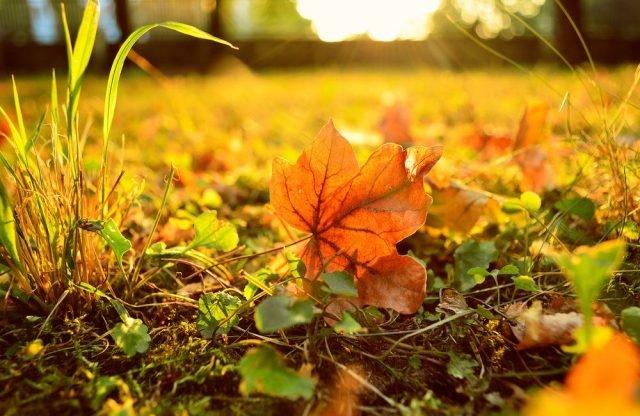 Осень картинки на рабочий стол 3 д012