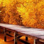 Осень картинки на рабочий стол 3 д