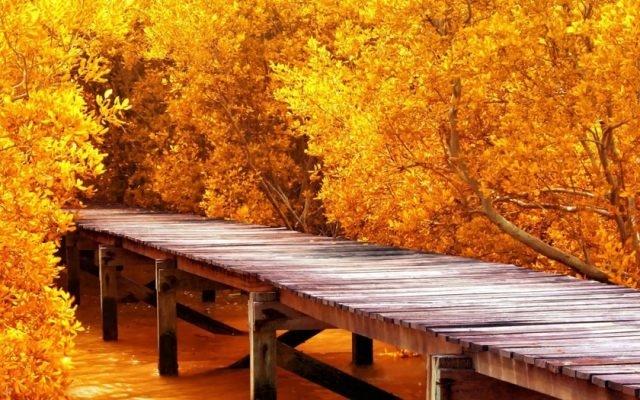 Осень картинки на рабочий стол 3 д024