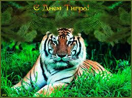 Открытки и картинки поздравления с днем тигра (10)