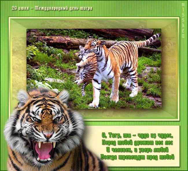Открытки и картинки поздравления с днем тигра (16)