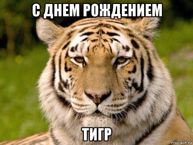 Открытки и картинки поздравления с днем тигра (18)
