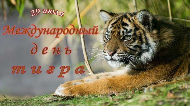 Открытки и картинки поздравления с днем тигра (5)