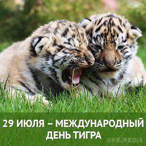 Открытки и картинки поздравления с днем тигра (9)