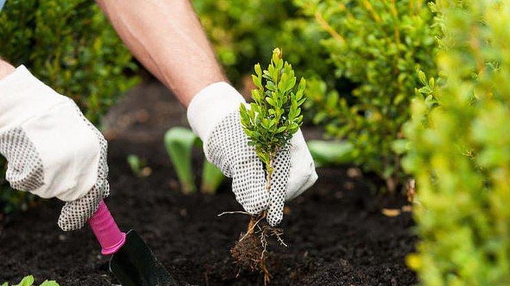 Открытки поздравления с днем садовода (4)