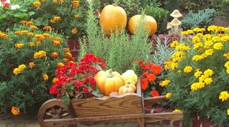 Открытки поздравления с днем садовода (5)