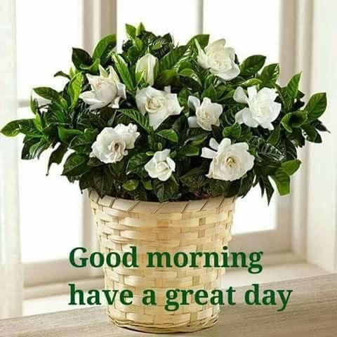 Открытки с добрым утром красивые на английском языке010
