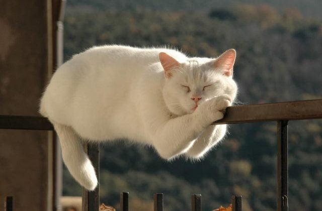Очень смешные картинки спящих - 30 фото (15)