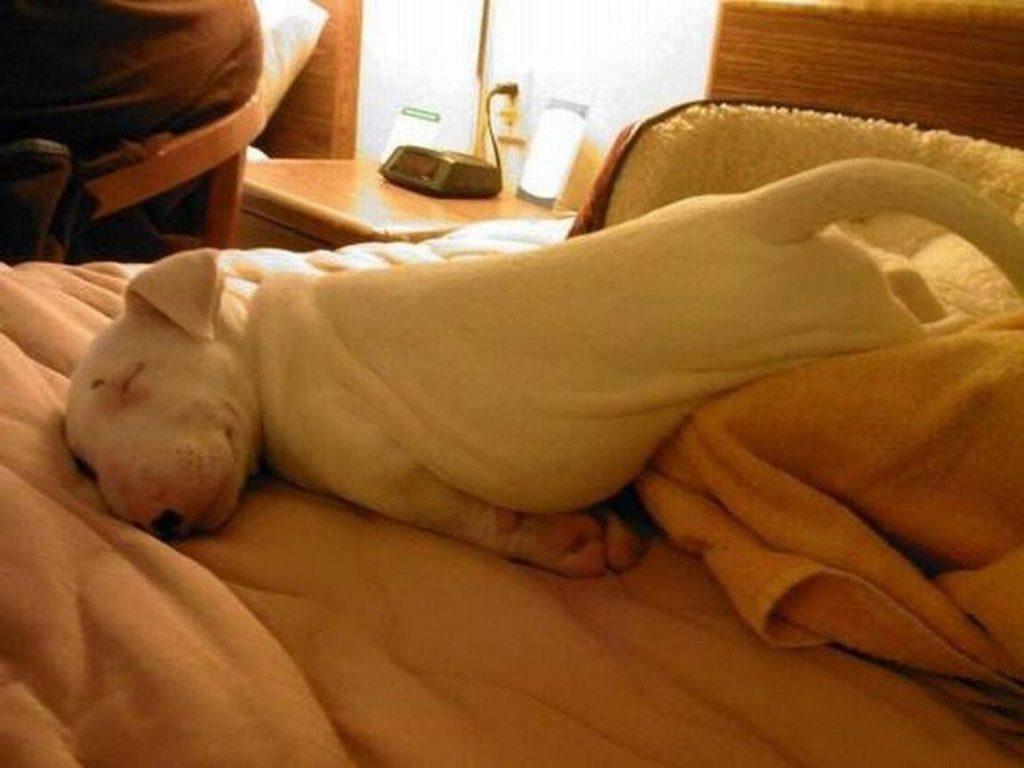 Очень смешные картинки спящих - 30 фото (26)