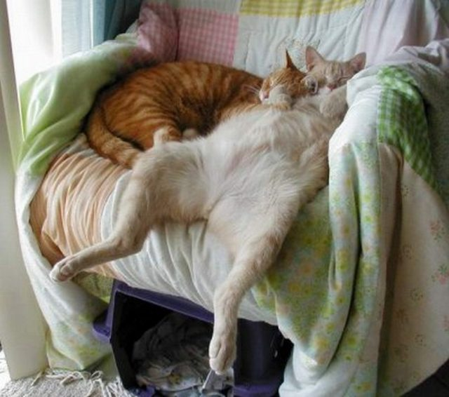 Очень смешные картинки спящих - 30 фото (6)