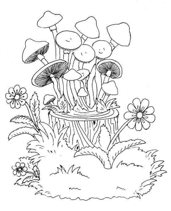 Пенек с грибами раскраска для детей002
