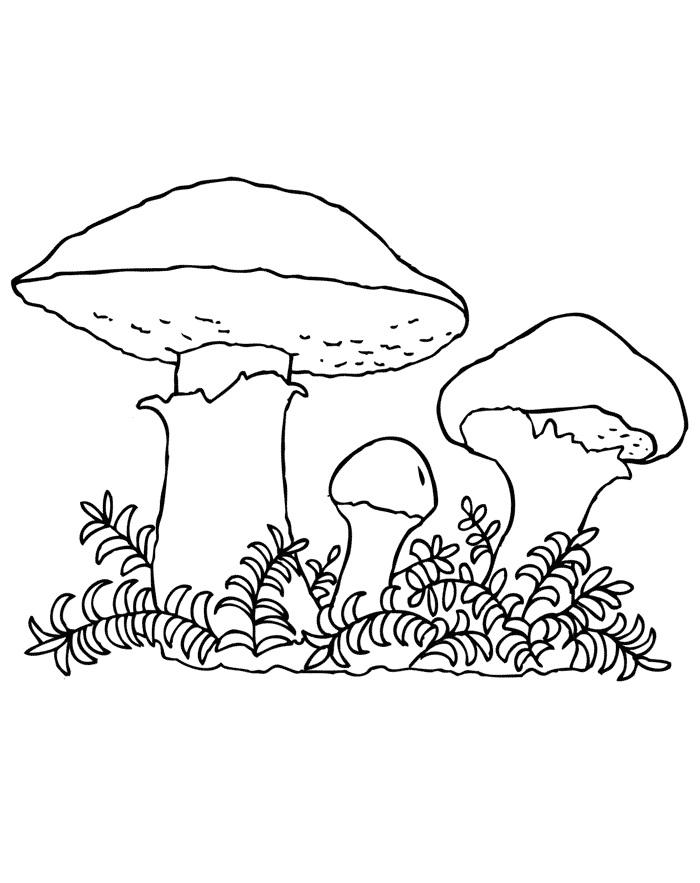 Пенек с грибами раскраска для детей014