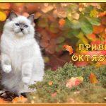 Поздравления с 1 октябрем прикольные открытки