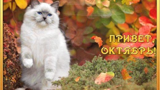 Поздравления с 1 октябрем прикольные открытки002