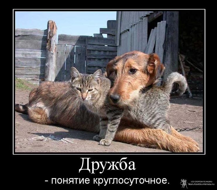 Прикольные картинки дружеская поддержка020