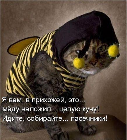 Прикольные картинки животных и зверюшек (2)