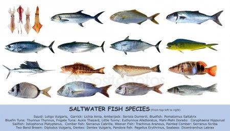 Прикольные картинки нарисованные рыбы012