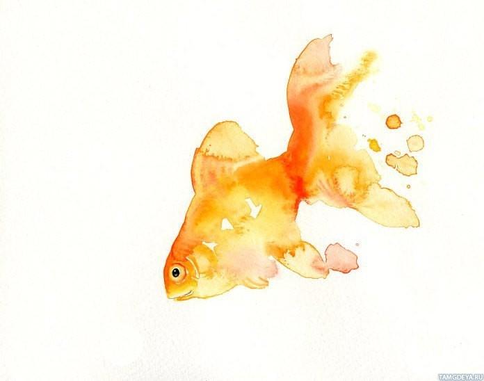 Прикольные картинки нарисованные рыбы015