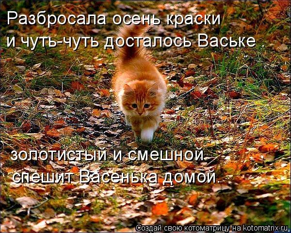 Прикольные картинки про осень смешные для друзей013