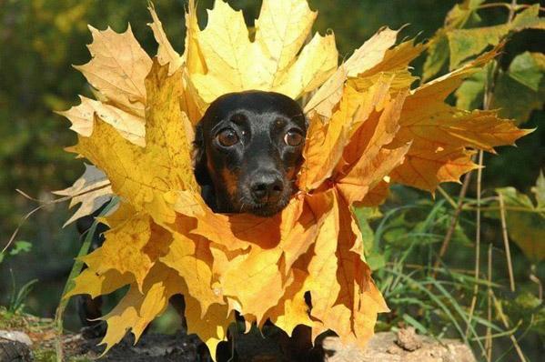 Прикольные картинки про осень смешные для друзей019