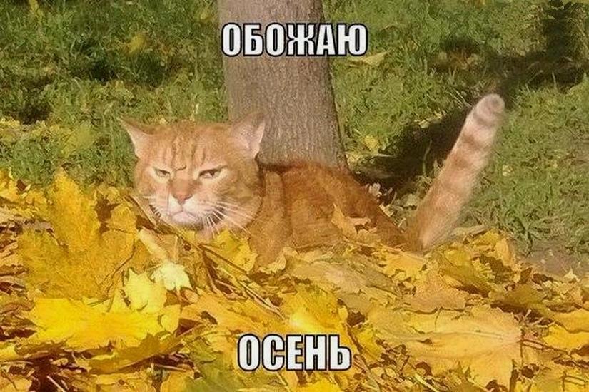 Прикольные картинки про осень смешные для друзей024