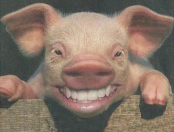 Прикольные картинки про свиней - 32 фото (29)