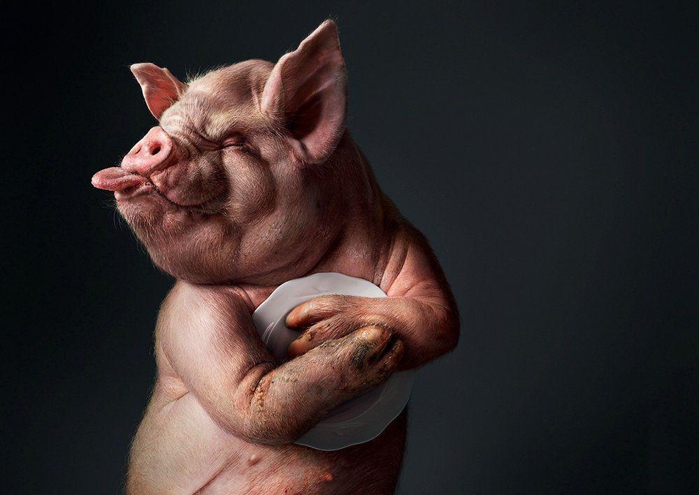 Прикольные картинки про свиней - 32 фото (7)