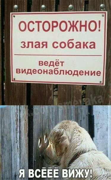 Прикольные картинки собак с надписью - 24 фото (11)